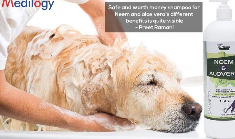 Best Medicated Dog Shampoo for Itchy Skin India